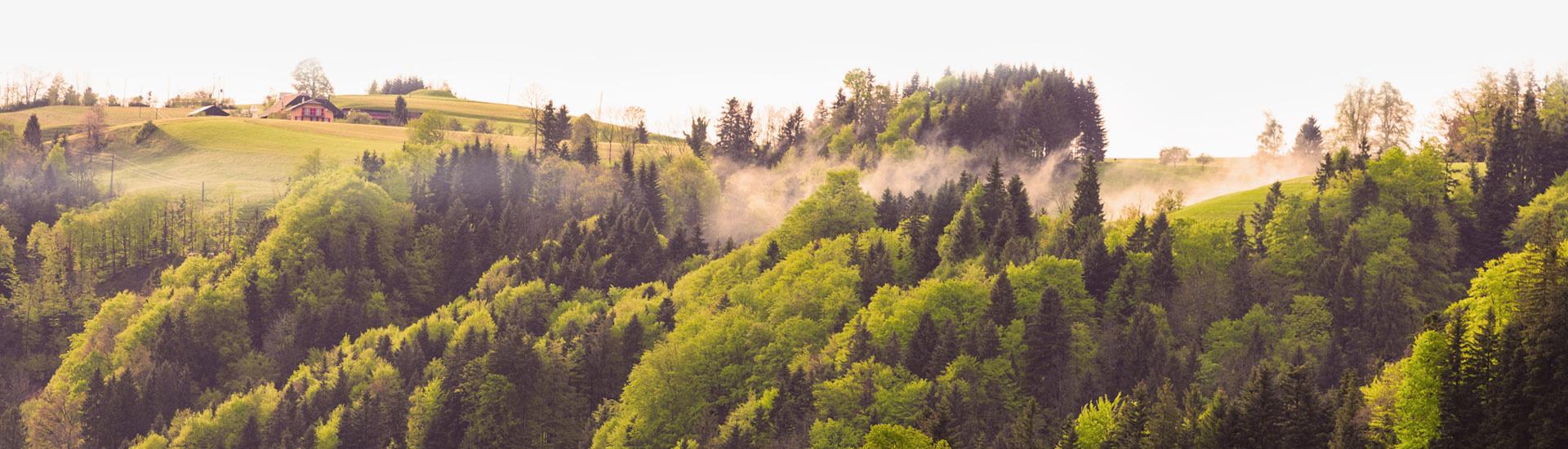 Arc Arboricultural Solutions